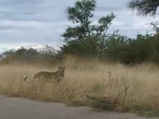 El parque kruger, aventura Sudáfrica