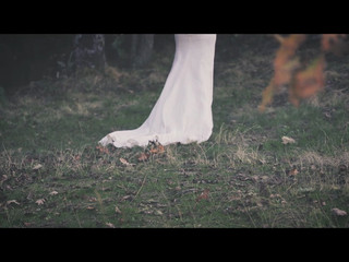 Love in Forest - Guillermo y Sara