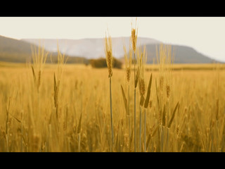 Aida + Victor teaser