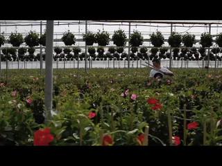 Trailer Virginia y David