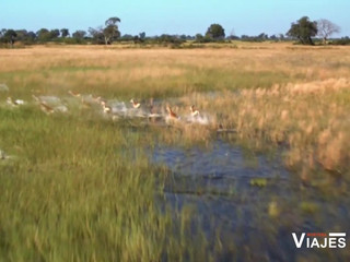 África, naturaleza salvaje