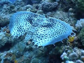 Mauritius tourism promotional video