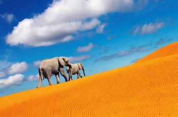 Luna de miel en Namibia: el reino de los himba