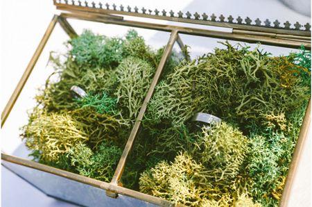 25 porta alianzas vegetales muy originales para tu boda