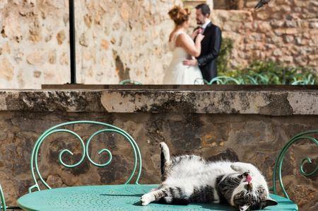 10 ideas para compartir tu boda con tu mascota