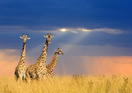 Luna de miel en Kenia: de safari por África
