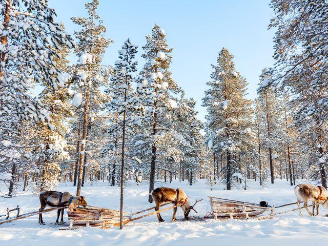 Luna de miel en la Laponia finlandesa: donde los sueños se hacen realidad
