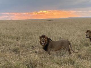 Masikio Safaris 2