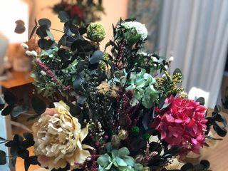 Begonias Flores 2