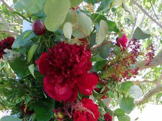 A flor de... 3