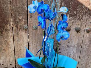 Arte Floral Sweet Carolina 5
