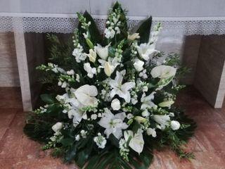 Flores Manso 1