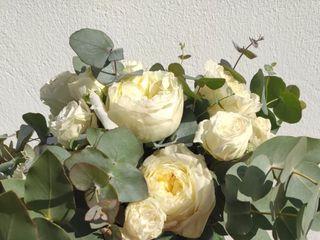 Cartamo Flores 1