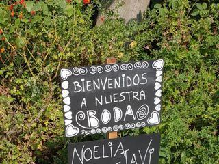Dianthus Rosa Planellas 3