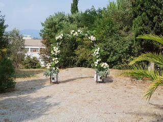 Dianthus Rosa Planellas 5