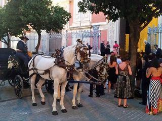 Picadero Curro Jiménez - Coche de caballos 2