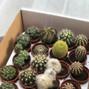 La boda de Sandra Flaquer Fernández y La Tienda del Cactus 3