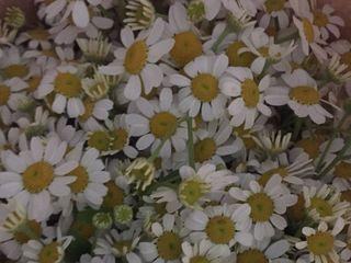 La Victoria Arte Floral 1