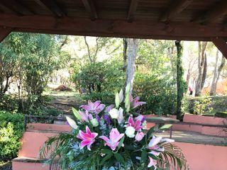 Flors i Plantes Bertrán 2