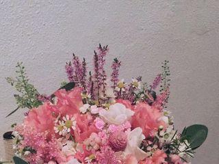 Dianthus Rosa Planellas 1
