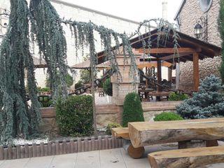 Restaurante Mariola 6