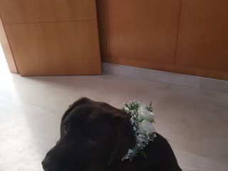 7 de flors 2