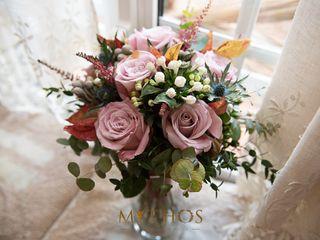 Cartamo Flores 3
