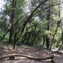 El clar del bosc 16