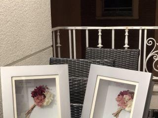 Begonias Flores 3