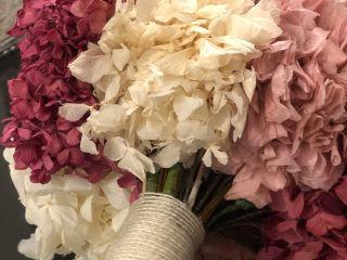Begonias Flores 5
