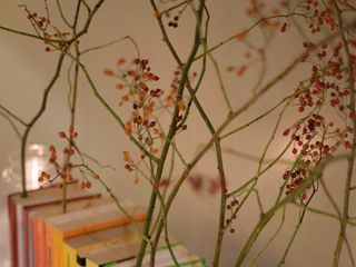 The Fotoshop 3