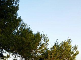 Somnis Mediterranis 5