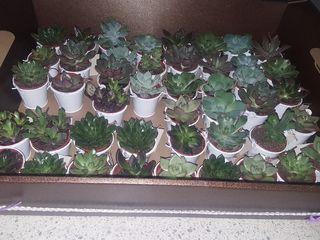 La Tienda del Cactus 2