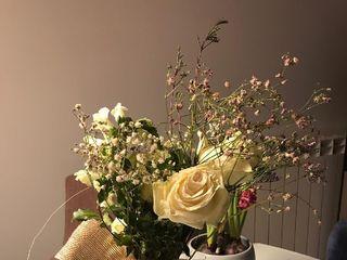 Terrae Floristas 3