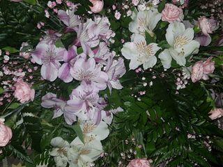 Seral Floristas 4