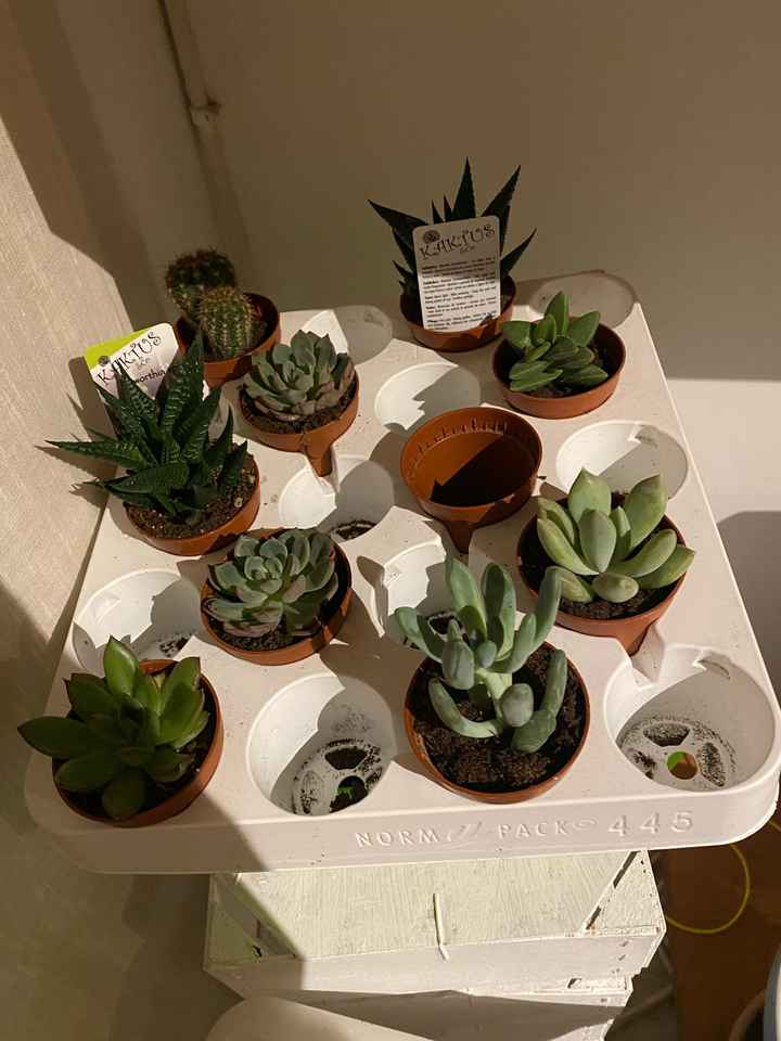 Idea para plantitas suculentas - 3