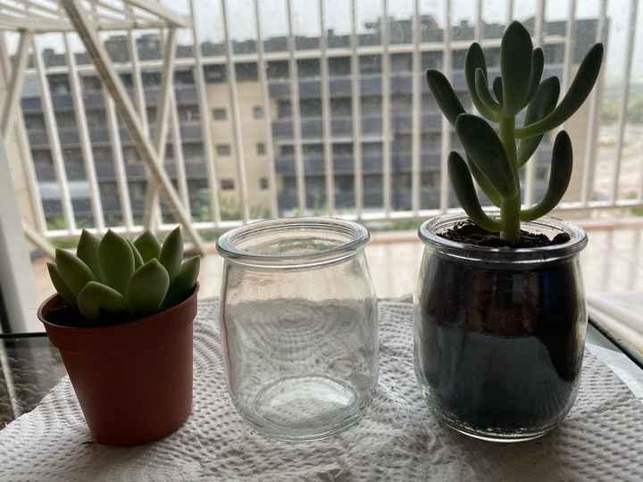 Idea para plantitas suculentas - 1