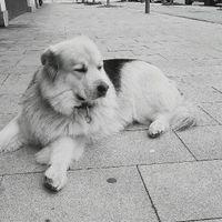 Llevaréis a vuestro perro al día b - 1