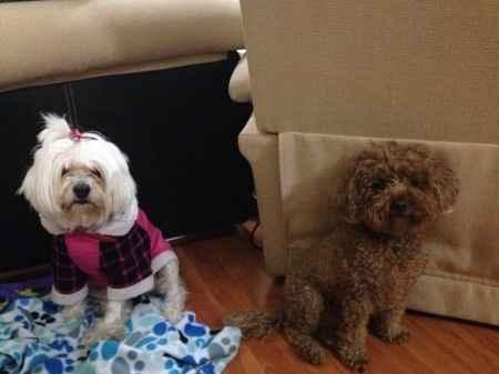 Nuestras mascotas!! - 2