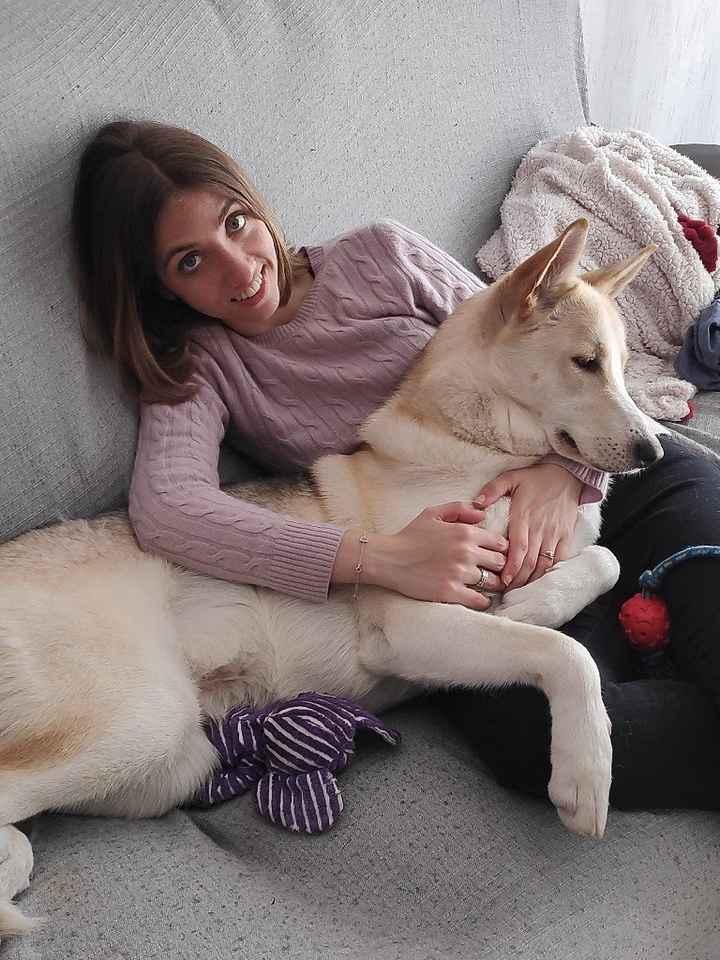 Mascotas en casa: ¿sí o no? - 2