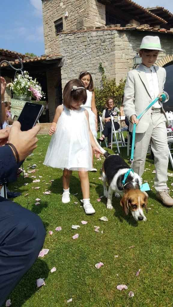 ¿SÍ o NO? ¡Mascotas en la boda! - 1