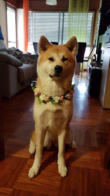 ¿Perro en la boda? ¿Sí o no? 8