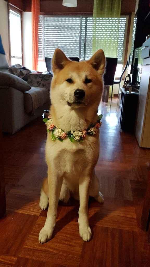 ¿Perro en la boda? ¿Sí o no? - 1