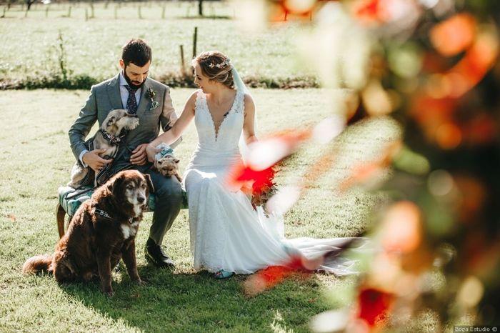 ¿Tendrán algún papel vuestros peluditos en la boda? 🐶 1