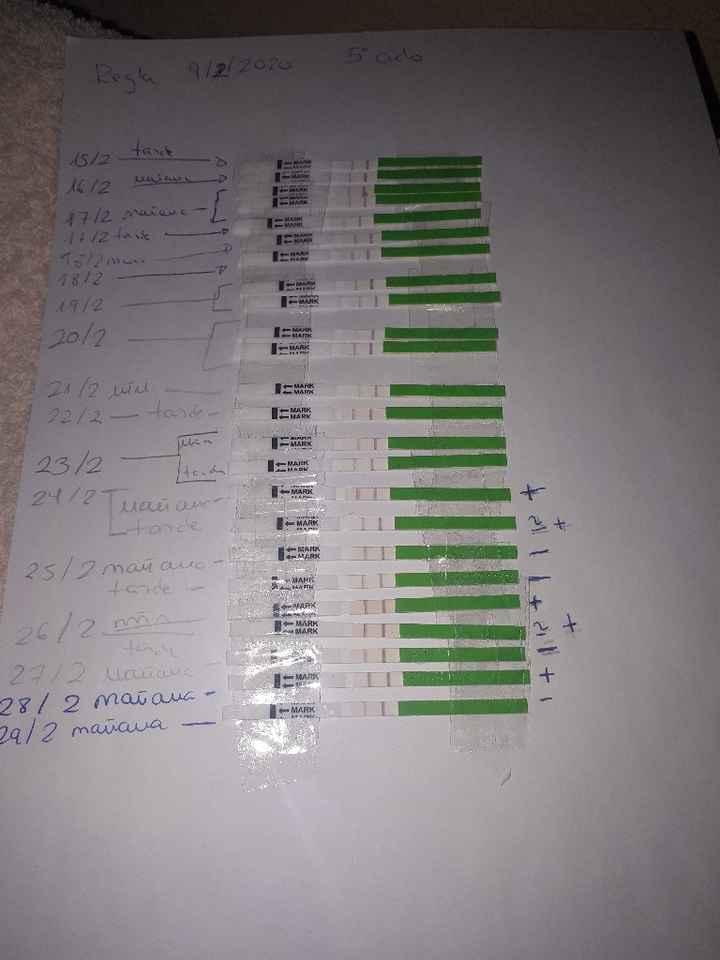 Test de ovulacion positivos y temperatura no sube - 1