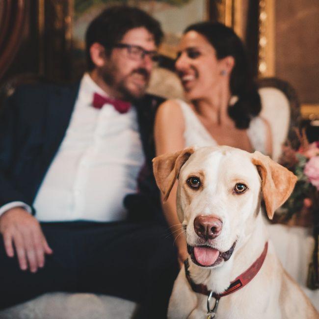 Mascotas en fotos de boda 8