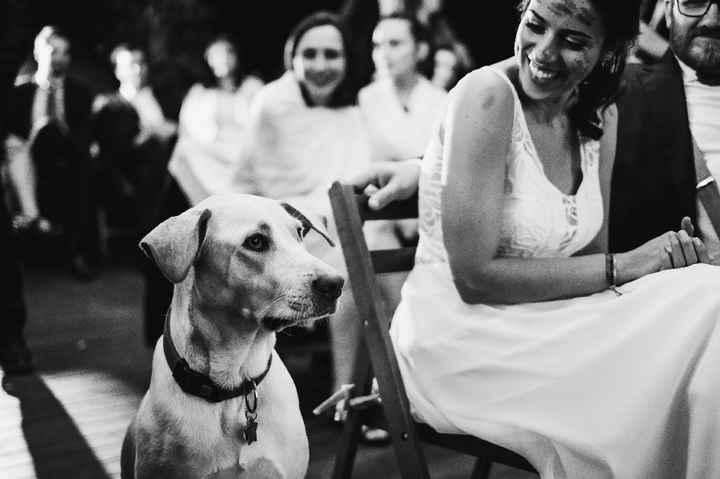 Perro en la boda? Si o no? - 1