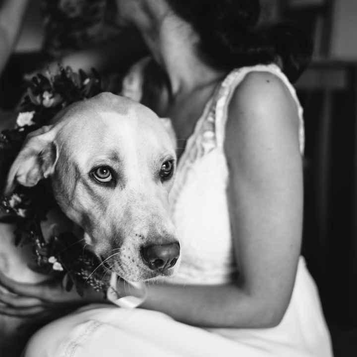 Mascotas en fotos de boda - 1