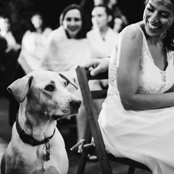 Mascotas en fotos de boda - 3
