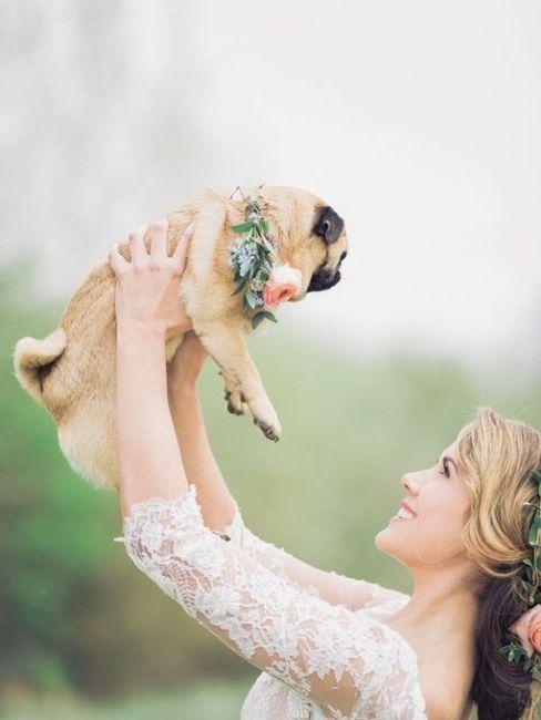 Si hoy me casara, lo haría con... ¡esta MASCOTA! 1